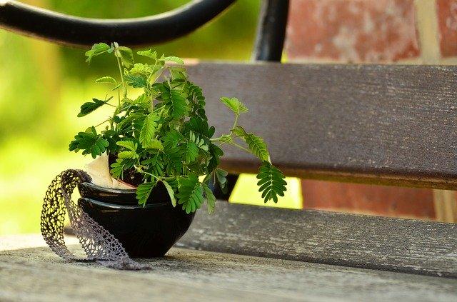 malá rostlinka